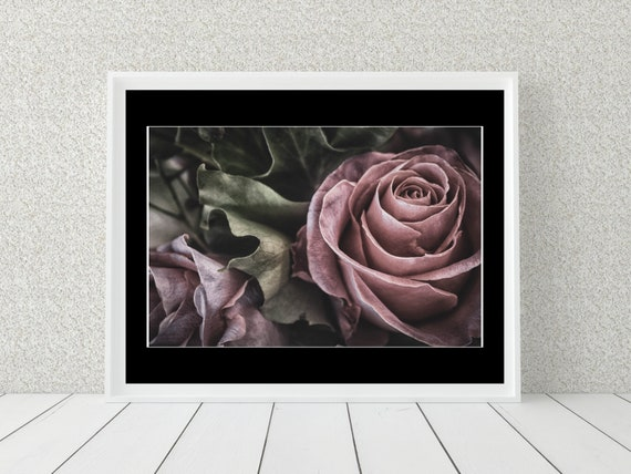 Pink Rose Photo Print, Floral Photography, Botanical Decor