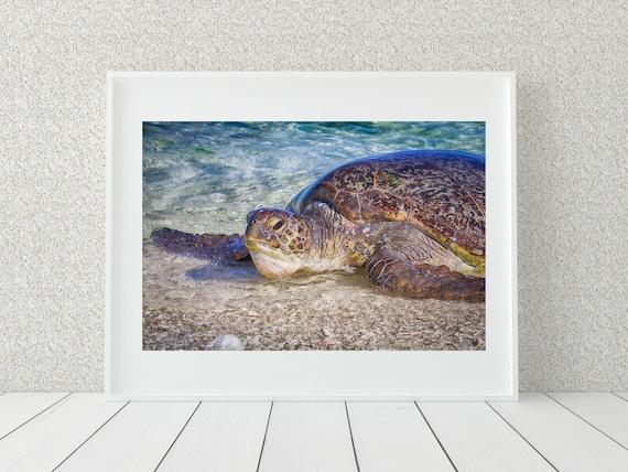 Sea Turtle Photography Print, Great Barrier Reef Wall Decor, Coastal Decor