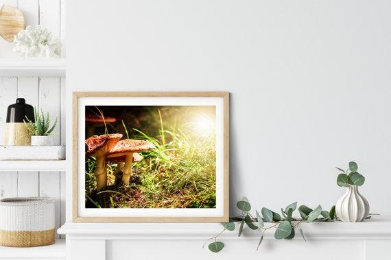 Mushroom Photo Print, Wanaka, New Zealand, Cottagecore Decor