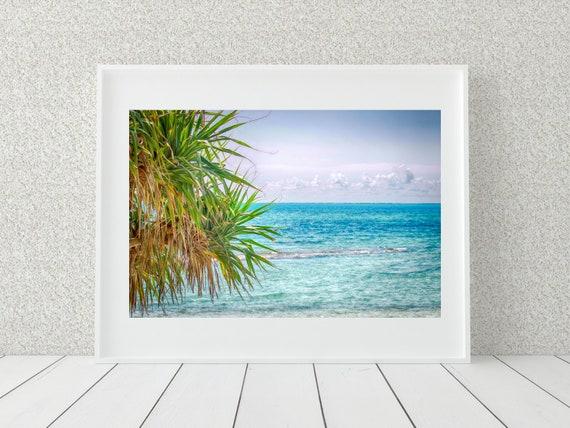 Tropical Palm Photo Print, Australian Photography, Coastal Decor
