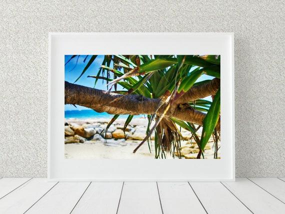 Pandanus Photo Print, Australian Photography, Tropical Decor