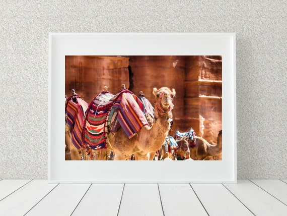 Camel Photo Print, Boho Decor, Middle Eastern Decor