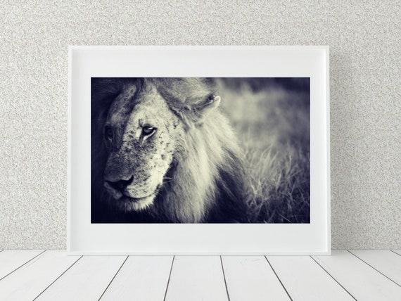 African Lion Photo Print, Tanzania Art, Wildlife Photography, Safari Nursery Decor