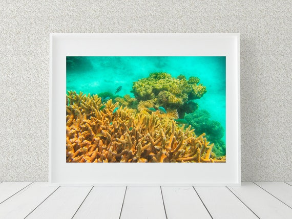 Underwater Coral Photo Print, Australian Photography, Coral Reef Decor