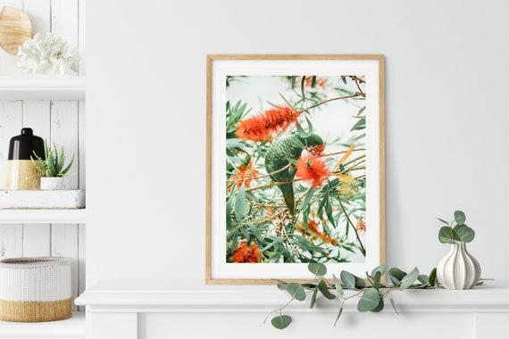 Australian Bird Print, Nature Photography, Botanical Decor