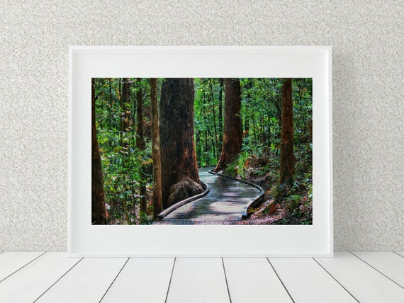 Forest Path Photo Print, Australian Prints, Nature Photography