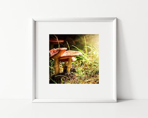 Mushroom Photo Print, New Zealand Photography, Fairy Decor