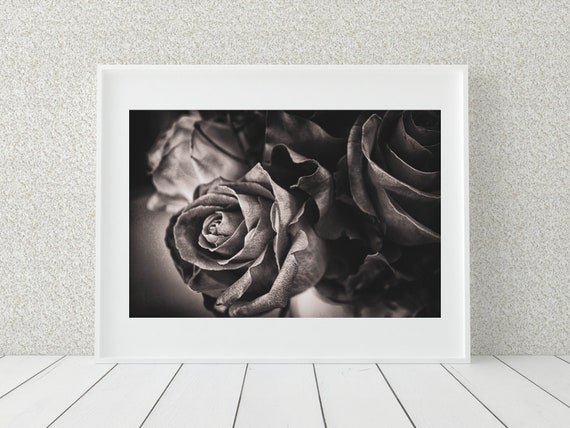 Black And White Rose Print, Floral Photography, Botanical Print