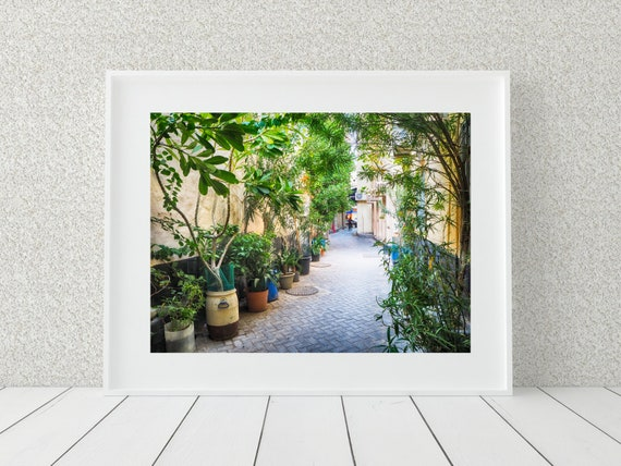 Tree Lined Path Photo Print, Street Photography, Nature Print