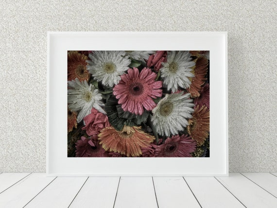 Gerbera Flower Photo Print, Floral Photography, Bangladesh Print