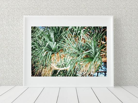 Pandanus Palm Photo Print, Australian Photography, Coastal Decor