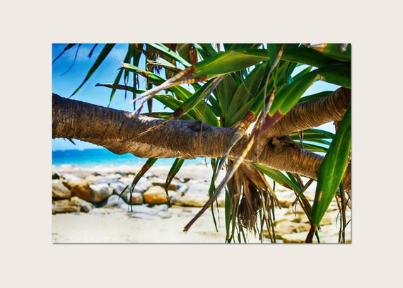 Pandanus Palm Canvas Print, Australian Photography, Coastal Decor