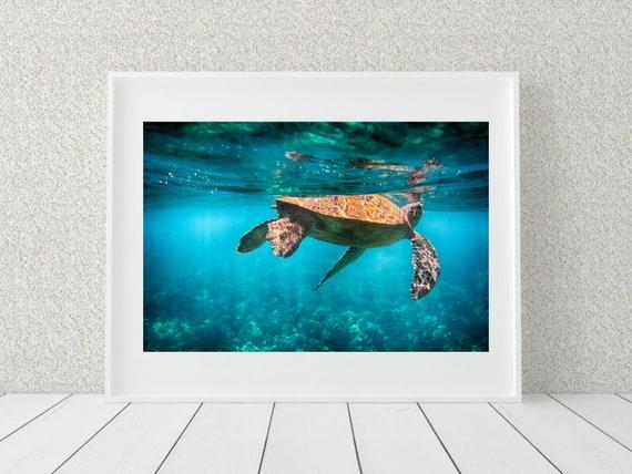 Sea Turtle Photography Print, Hawaii Photo Print, Coastal Decor