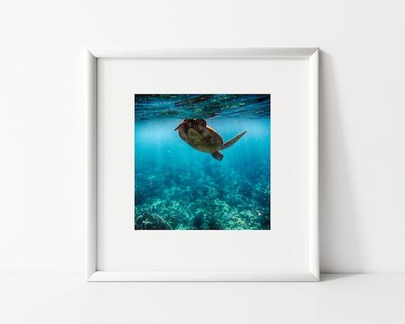 Sea Turtle Print, Square Photography Print, Underwater Print
