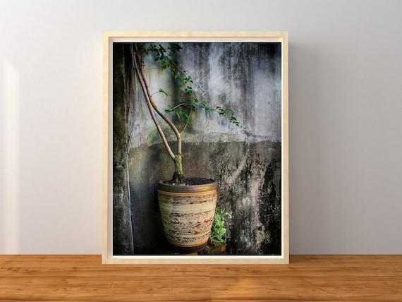 Flower Pot Photo Print, Taiwan Photography, Botanical Decor