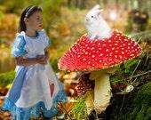 Alice in wonderland costu...
