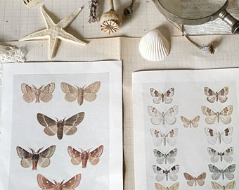 Two beautiful antique colour book plate prints of British moths