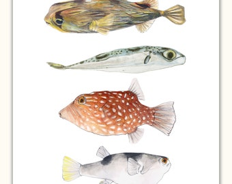 Pufferfishes: Yellow, Blue, Orange, Lemon-tailed