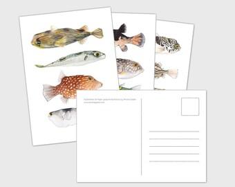 Pufferfish Postcards