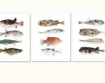 Pufferfish Set