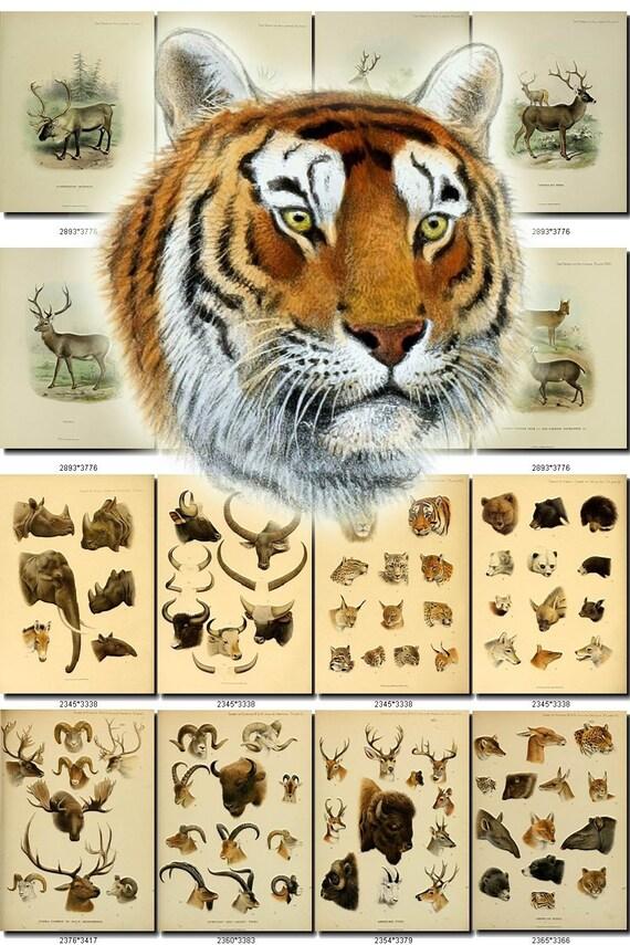 Wild Safari North American Wildlife renard noir Safari Ltd Animal Toy Figure