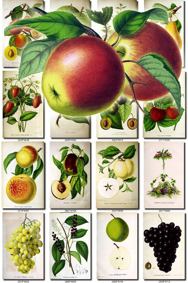 graphic about Printable Fruit and Vegetables identify Culmination Veggies-13 Range of 80 basic visuals Apple Pear Peach Strawberry Plum photos Large option electronic obtain printable