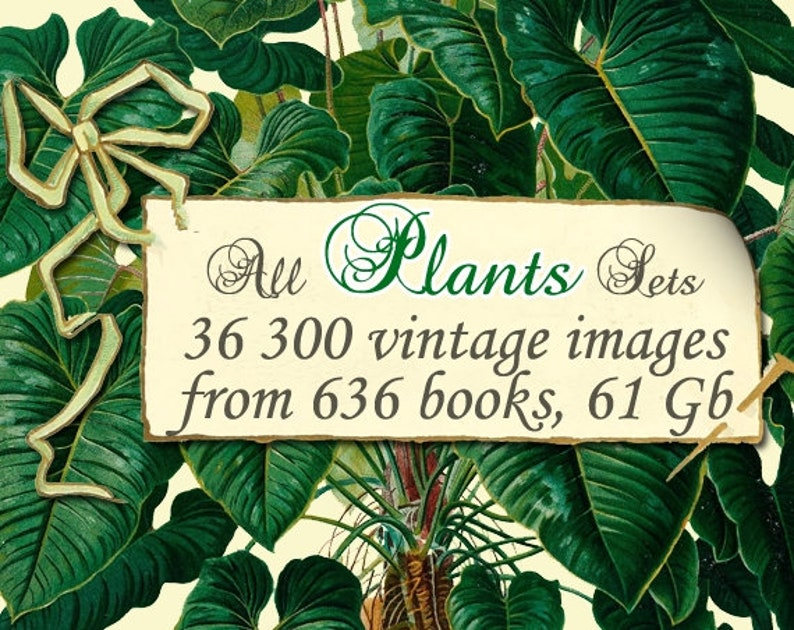 ALL PLANTS Collections 1-157 with 36 300 vintage pictures of plants digital download old printable illustrations wholesale discount