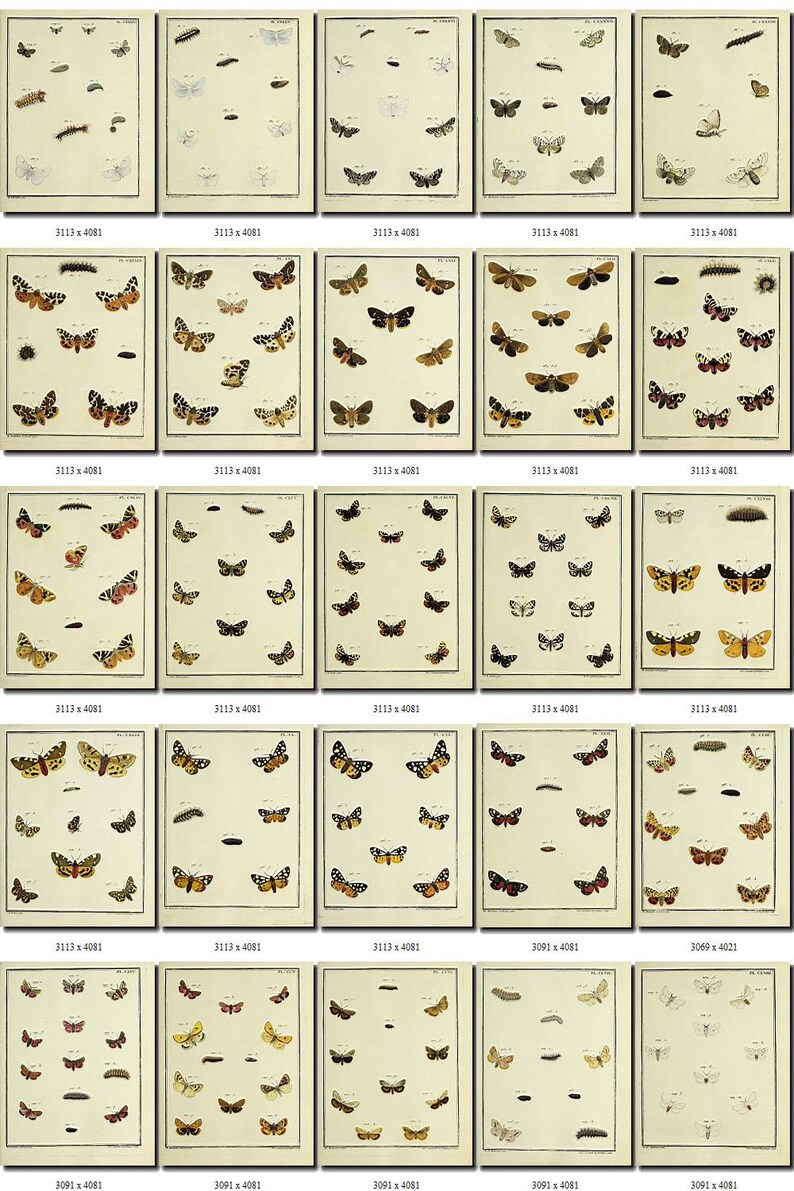 BUTTERFLIES-83 Collection of 225 vintage illustrations clip art clipart pictures images High resolution digital download printable large