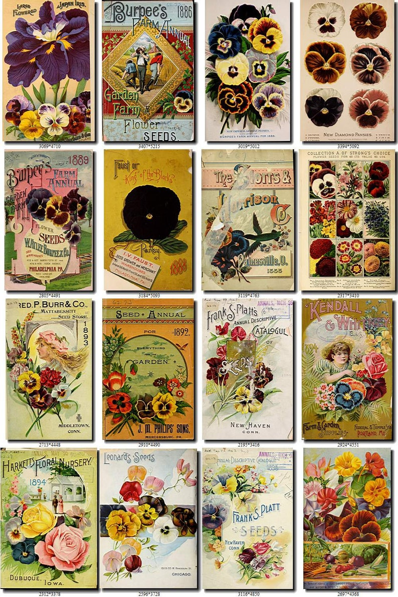 PANSY-2 Collection of 150 vintage images pictures High resolution digital  download printable 300 dpi viola pansies botanical old paper jpeg