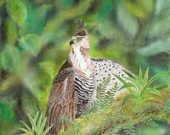 Ornate Hawk-Eagle, Giclee Print, Tropical, Costa Rica, Eagle, Bird-of-Prey, Fine Art