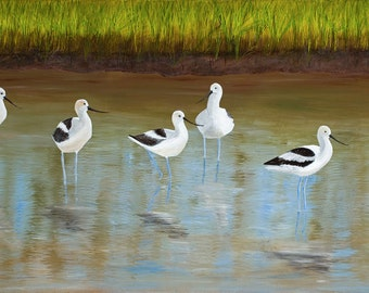American Avocets, Fine Art Giclee Print, Wall Decor