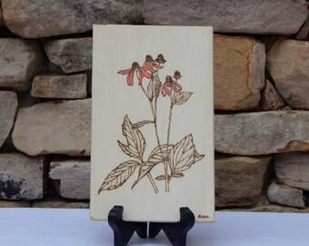 Cone Flower Woodburning Pyrography