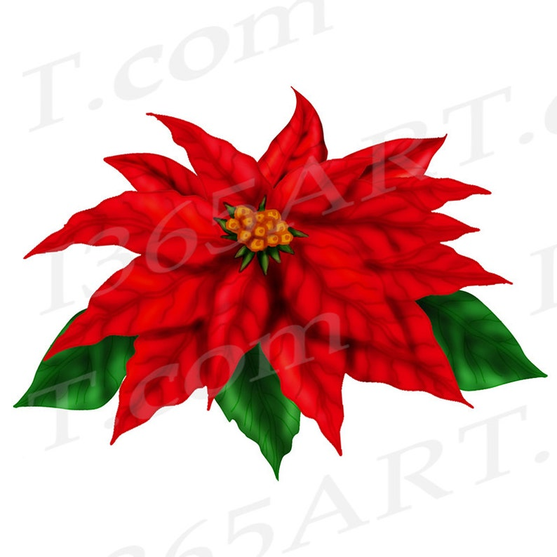 Christmas Flowers Christmas Clipart 50/% OFF Poinsettia Clip art Clipart Red Poinsettia Commercial Download DIY Flower Invitation