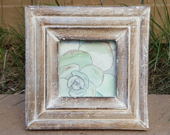 Framed Watercolour Succulent Painting