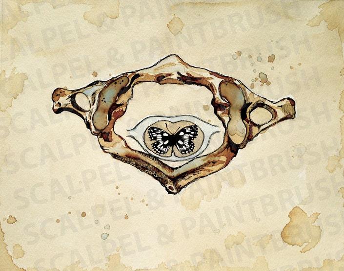 NUEVO 11 x 14 metamorfosis Atlas mariposa | Etsy