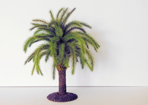 Canary Island Date Palm Tree 12 inches in height