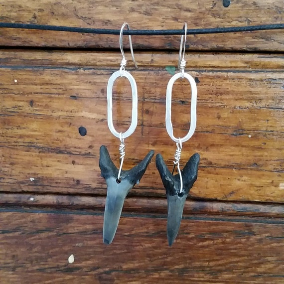 Fossilized shark tooth earrings on sterling silver