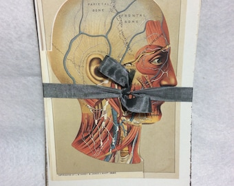 Layered Head illustration Illustrated Book Pages Medical Creepy Set of 25