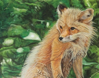 Oil Painting, Prints & Cards ~ Fox Basking in Sun