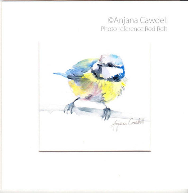 Bluetit Painting Original Watercolour Painting Bird Rod
