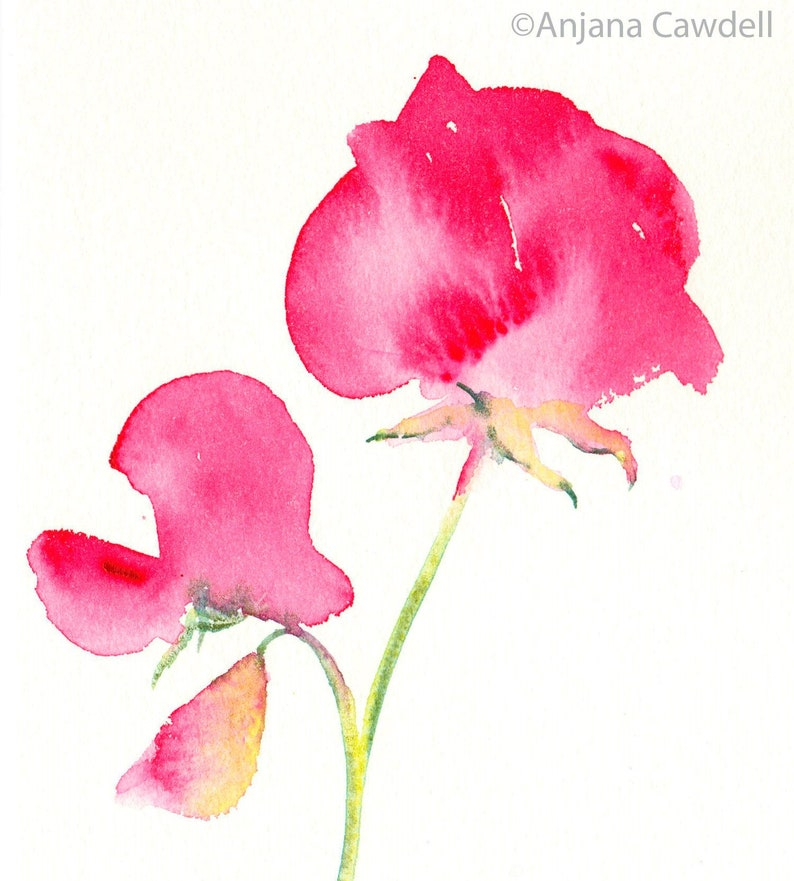 Framed Floral painting Original watercolour Sweetpea Ready image 0
