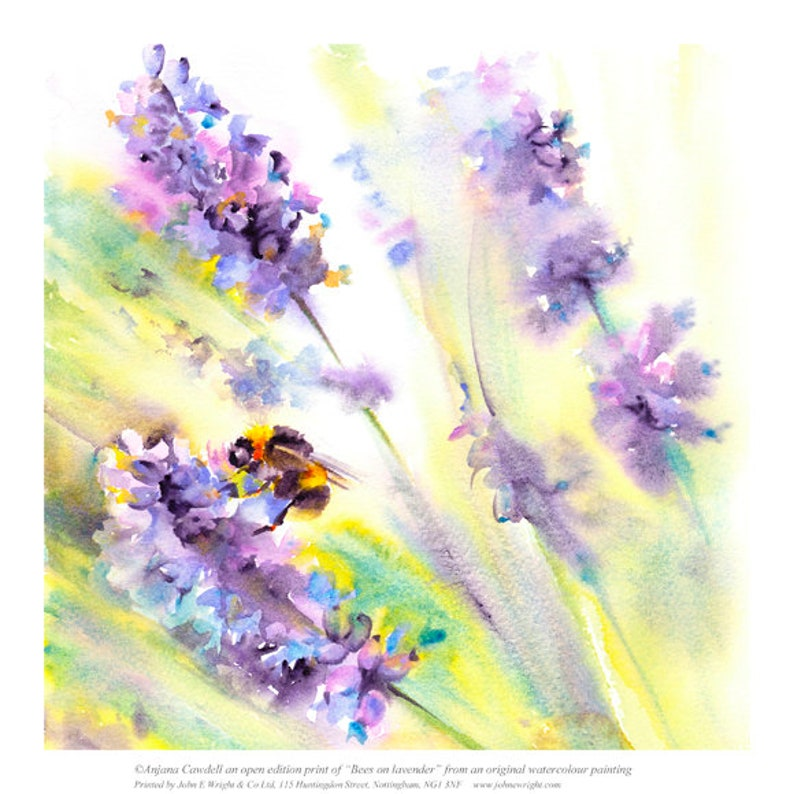 Bee on lavender  Giclee Print of Watercolour Painting Summer image 0