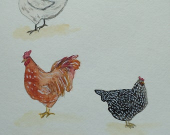 Chicken note cards come in sets of five cards and five envelopes.