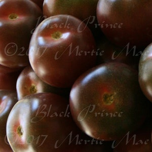 Heirloom Black Prince Tomato Seeds Organically Grown USA Made in Wisconsin non-GMO
