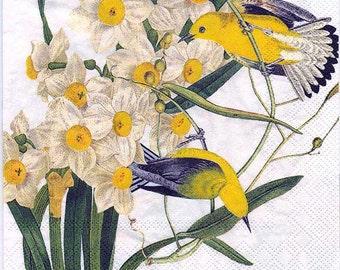 Paeonien-Aster Mischung 103135 Saatgut Blumen Sämereien Astern