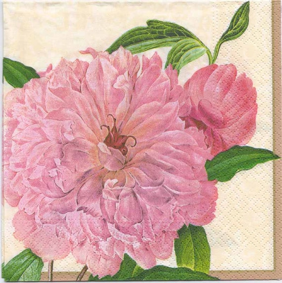 Decoupage Napkins Botanical Print Of A Farmers Rose Flower