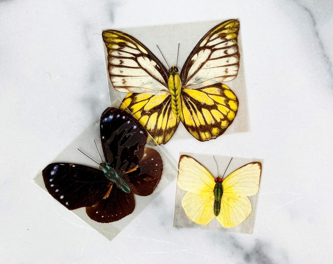 Real Vintage Butterflies with Paper Bodies - Set of 3 - Insect Taxidermy