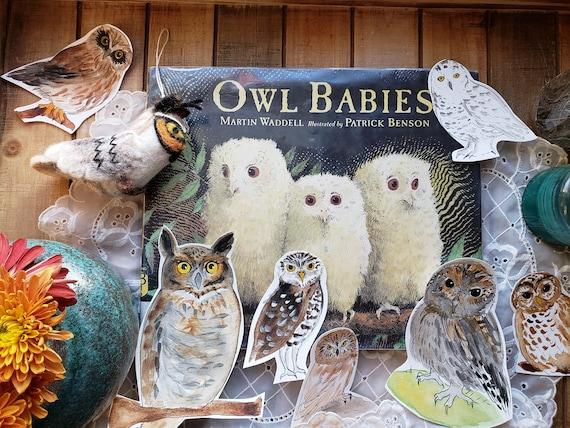 Owl Learning Set