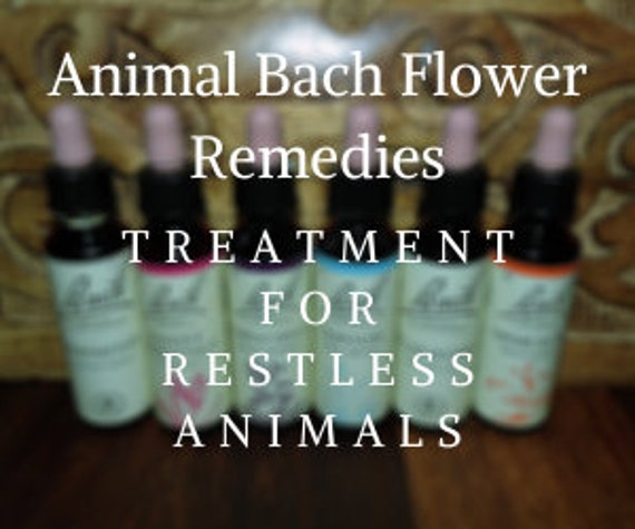 Bach Flower Remedies for Treating Restless Animals, Bach Original Flower Remedies, Bach Flower Essences
