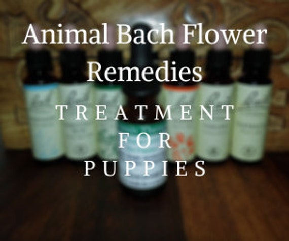 Animal Bach Flower Remedies for Puppies, Bach Original Flower Remedies, Bach Flower Essences